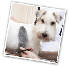 Cat & Dog Grooming Insurance | Petplan Sanctuary