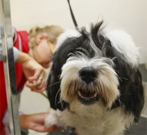 Dog & Cat Groomers Insurance